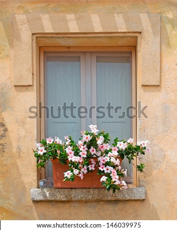 window with flowers on the sill