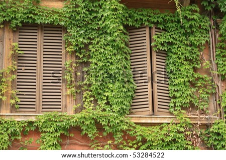 Windows and ivy - in Rome, Italy - stock photo