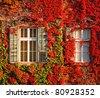 Windows at autumn - stock photo