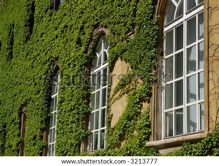 Windows of a library with a creeping leaves of wild wine - stock photo