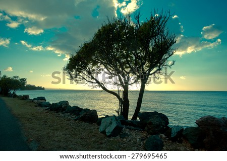 Windswept tree silhouette on coast at sunset - stock photo