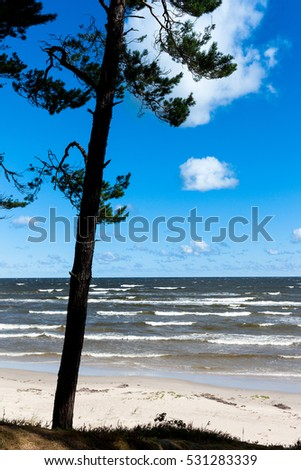 Windy day by Baltic coast.