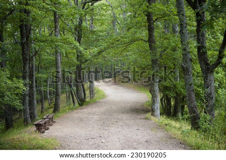 Windy dirt road going through the forest. - stock photo