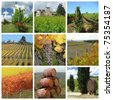wine agriculture collage, Chianti in Tuscany, Italy - stock photo