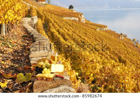 Wine and grapes on the terrace of vineyard in Lavaux region, Switzerland