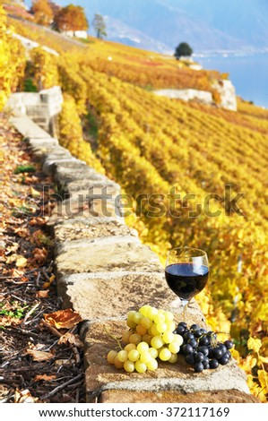 Wine and grapes on the terrace vineyard in Lavaux region, Switzerland - stock photo
