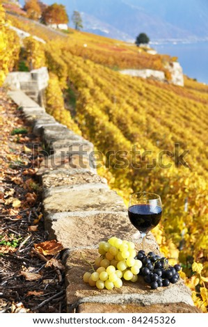 Wine and grapes on the terrace vineyard in Lavaux region, Switzerland