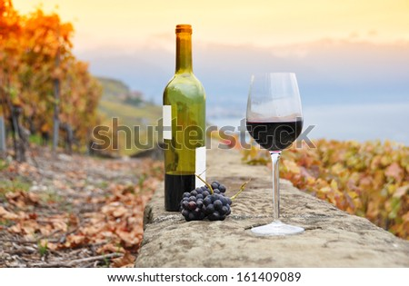 Wine and grapes. Terrace vineyards in Lavaux region, Switzerland