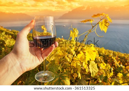 Wine and grapes. Terrace vineyards in Lavaux region, Switzerland - stock photo