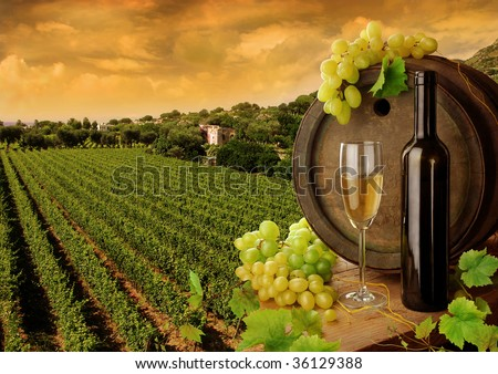 Wine and vineyard in sunset - stock photo