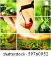 Wine.Beautiful Grapes Collage - stock photo