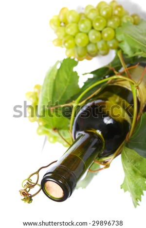 wine bottle and young grape vine - stock photo