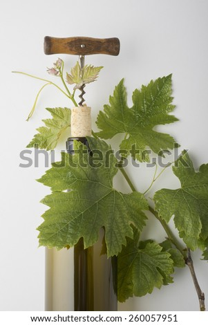 Wine bottle, cork and corkscrew with grape vines on white background, soft shadows - stock photo