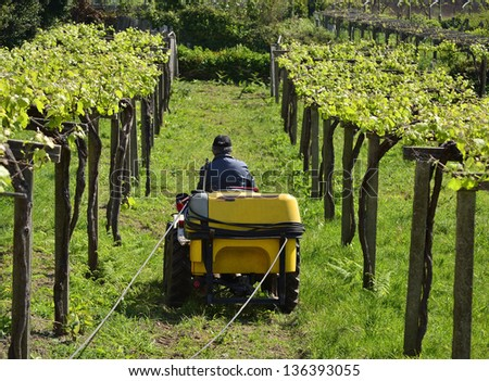 Wine business. A man works with a tractor. Traditional labor in a sunny day. Grapes grow in a vineyard. - stock photo