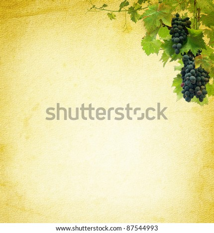 Wine composition for vintage background. Grapes on the blank paper for the wine collage. Bunches of red grapes - grapevine at the grunge texture. - stock photo