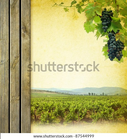 Wine composition with vineyard. Wine list background. Grape on the blank paper for the wine collage. Bunches of red grapes to grapevine and wooden grunge background. - stock photo