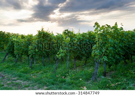 Wine fields in stuttgart germany and dramatic sky - stock photo