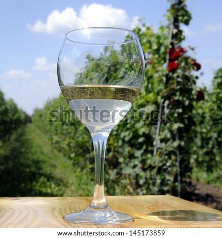 wine glass in vineyard - stock photo