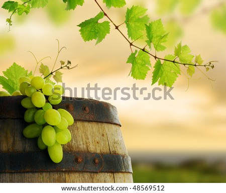 Wine grape and barrel with fresh grapevine border on background of sunset vineyard - stock photo