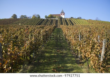 wine-growing - stock photo