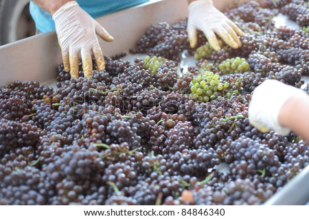 Wine-making Stock Images, Royalty-Free Images & Vectors | Shutterstock