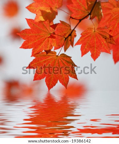 wine maple leaf abstract - stock photo