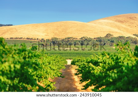 Wine valley  - stock photo