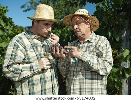 Winemakers tasting grapes outdoors in vinery during the vintage. - stock photo
