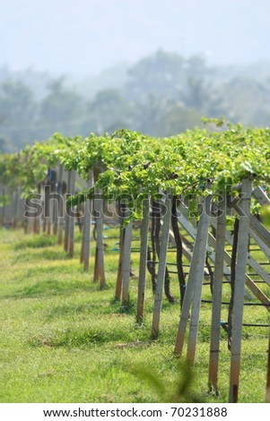 Winery farm in countryside of Thailand. - stock photo