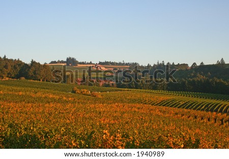 Winery in vineyard valley with fall colors - stock photo