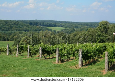 Winery Vineyard - stock photo