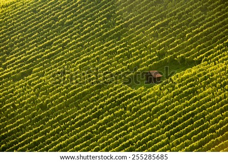 Wineyard cottage amidst meticulously planted vines in perfect sunlight , from air - stock photo