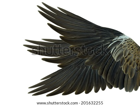 wing Isolated on white background - stock photo