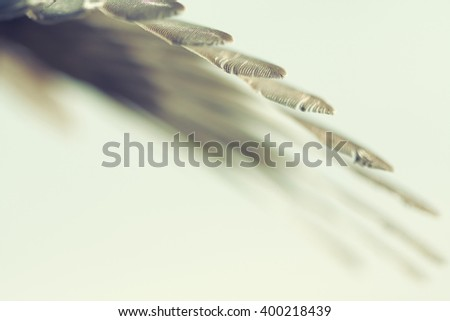 wing of bird against the sky, retro style photo - stock photo
