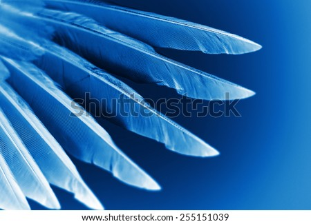 wing of bird close-up, x-ray effect - stock photo