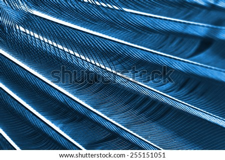 wing of bird close up, x-ray effect - stock photo