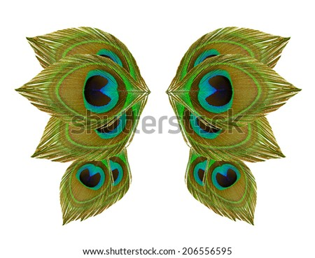 Wing peacock feathers on white background - stock photo