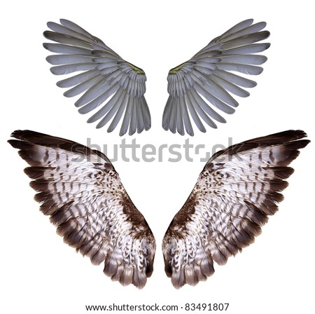 Bird With Open Wings Drawing Pinion
