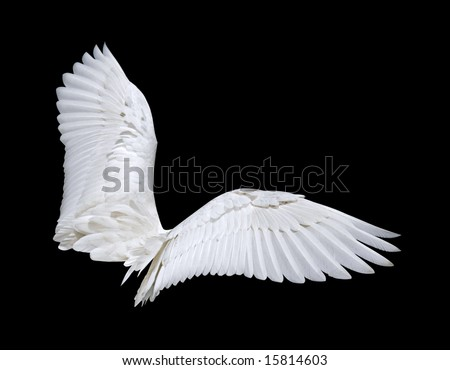 Wings (isolated) - stock photo