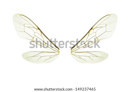 Wings of a bee isolated on a white background - stock photo