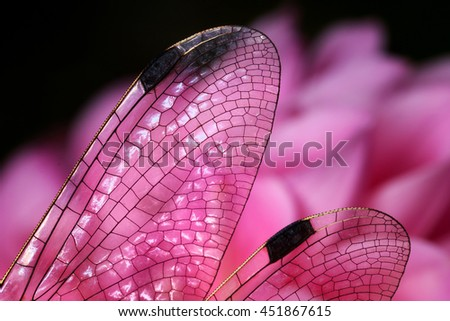 Wings of a dragonfly transparent impression of stained-glass  - stock photo