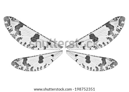 Wings of a snakefly isolated on the white background - stock photo