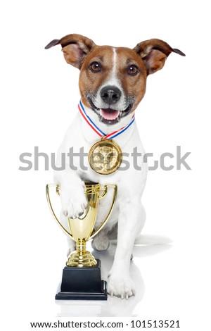 winner dog - stock photo