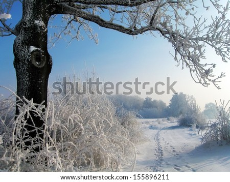 Winter Afternoon - stock photo