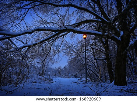 Winter alley in park and shining lantern.