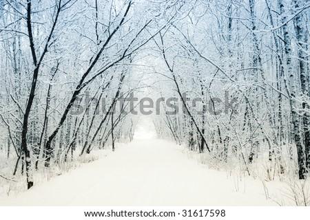 Winter alley running between the frozen trees - stock photo