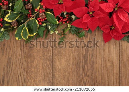 Winter and christmas flora with red poinsettia flowers, holly, ivy, mistletoe and spruce fir over oak wood background. - stock photo