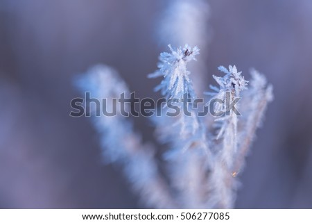 Winter background. Frozen grass, covered with hoarfrost or rime.