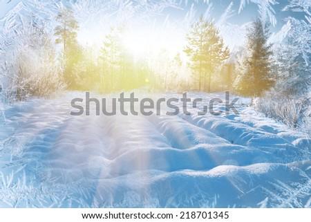 Winter background, landscape. Winter trees in wonderland. Winter scene. Christmas, New Year background  - stock photo