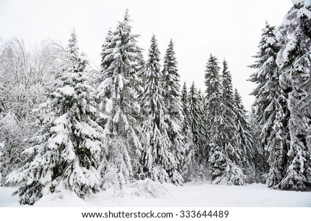 Winter background with a snow-covered forest - stock photo